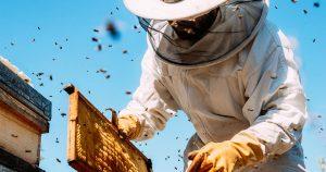 Honey Bees-Saviors And Aggressors