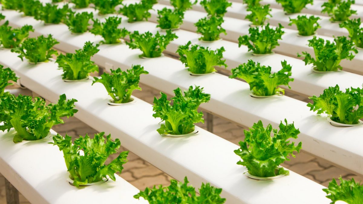 Get The Best Ideas for Perfect Hydroponic Garden Kit System for Healthy Garden